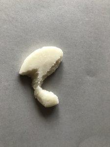 子年の記念歯型